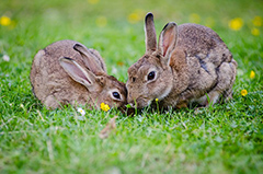 rabbits-small